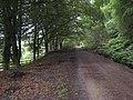 South Tyne Trail near Softley Farm - geograph.org.uk - 886412.jpg