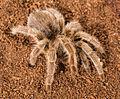 Spider27.jpg