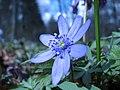 Spring in Botanic Garden Cluj-Napoca (2346031754).jpg