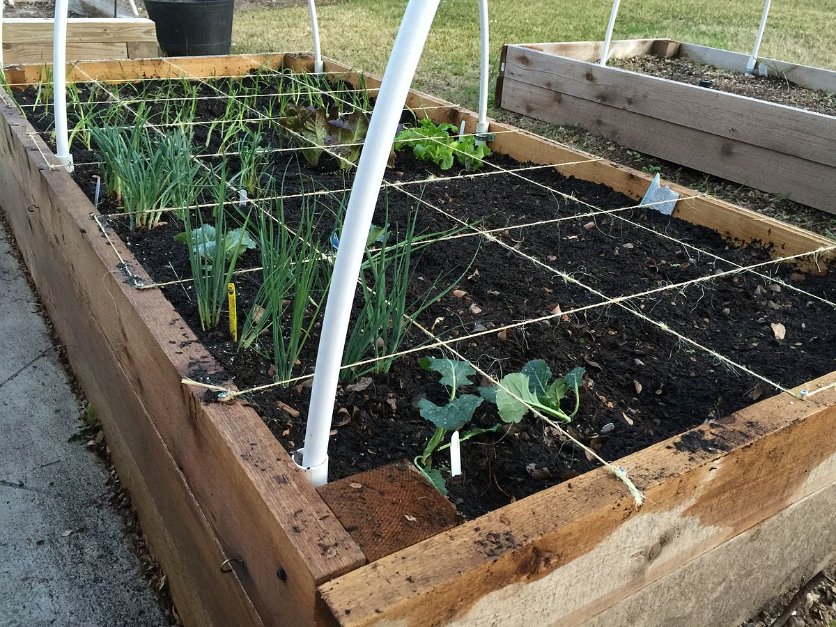 Square foot gardening Wikipedia