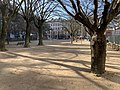 Square Sainte-Marie-Perrin (Lyon) - vue (1).jpg