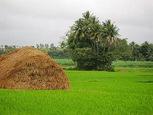 Srirangapatna - Srirangapatna