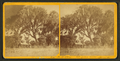 St. Johns River, Florida, from Robert N. Dennis collection of stereoscopic views.png