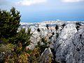 St Hilarion Gipfelregion Bewuchs.jpg
