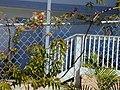 Starr-010304-0487-Quisqualis indica-habit-Kihei-Maui (24531997015).jpg