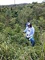 Starr-020620-0054-Coccinia grandis-habit in gulch with Kim-Kapalua-Maui (23923154293).jpg