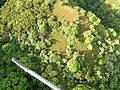 Starr-141014-2229-Caesalpinia decapetala-aerial view-Kakipi Gulch Haiku-Maui (24879603149).jpg