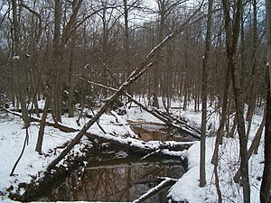 Greenbelt, Maryland - Winter view of Still Creek in Greenbelt Park