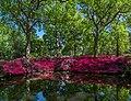 Still Pond 3, Isabella Plantation, Richmond Park, London, UK - Diliff.jpg