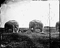 Stone elephants, Ming tombs, Nangking, Kiangsu province, Wellcome L0018790.jpg