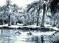 Sufwa Gardens, Qatif.jpg