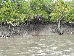 Sundarban mangrove.jpg
