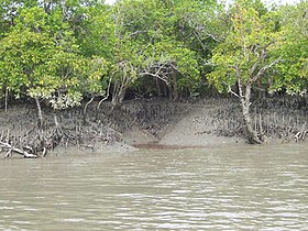 Image illustrative de l'article Parc national des Sundarbans