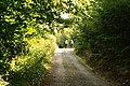 Sunlit Forest Walk - geograph.org.uk - 966767.jpg