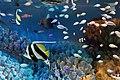 Sunshine Aquarium 3-22 (26355288356).jpg