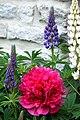 Switzerland-01798 - St Moritz Flowers (21677530893).jpg