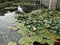 Taishacho Kizukihigashi, Izumo, Shimane Prefecture 699-0701, Japan - panoramio (8).jpg
