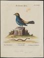 Tangara tatao - 1700-1880 - Print - Iconographia Zoologica - Special Collections University of Amsterdam - UBA01 IZ15900343.tif