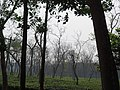 Tea gardens Srimangal Sreemangal Upazila Moulvibazar Maulvibazar Moulavibazar Sylhet 11.jpg