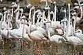 Tehran Birds Garden - 1 April 2015 (13940112183834814).jpg
