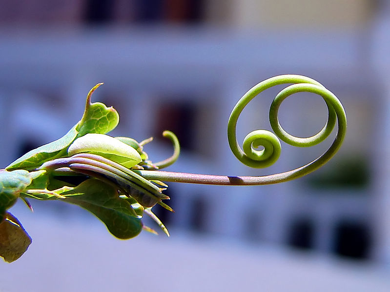 Bestand:Tendril.jpg