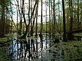Teufelsbruch swamp at the Bäckerfurt in summer 3.jpg