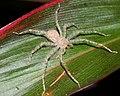 The Beautiful And Misunderstood Spiders (212516595).jpeg