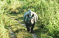 The Pride of Assam- One Horned Rhino.jpg