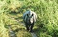 The Pride of Assam- One Horned Rhino.jpg