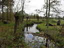 The River Leach at Southrop - geograph.org.uk - 1592830.jpg