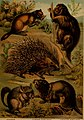 The animal kingdom; based upon the writings of the eminent naturalists, Audubon, Wallace, Brehm, Wood and others (1897) (18009175308).jpg