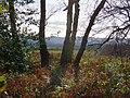 The edge of Durford Wood - geograph.org.uk - 1132137.jpg