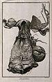The female generative organs, after Haller. Engraving by Ben Wellcome V0007851EL.jpg