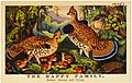 The happy family, Ruffed Grouse and Young (76747).jpg