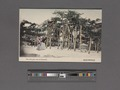 The old pine tree of Karasaki (NYPL Hades-2360044-4043843).tiff