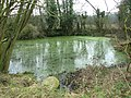 The pond by Planet Farm, Hethersett - geograph.org.uk - 2290910.jpg