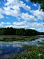 This is the view at horse Pond. I was coming back after picking blueberries. I had to stop and take some pictures. - Flickr - ms.Tea.jpg