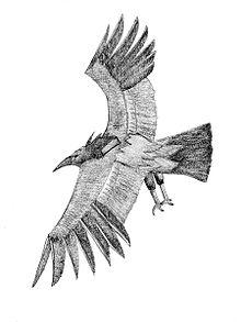 Thunderbird (cryptozoology) - Wikipedia