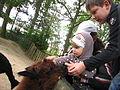 Tierpark Essehof - Llama.Jpg
