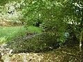 Tiny pond above Lizard Wood Farm - geograph.org.uk - 1430481.jpg