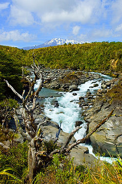 Mahuia River i Tongariro National Park.