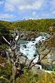 Tongariro Mahuia River n.jpg