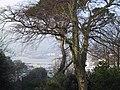 Torquay Marina through the Trees - geograph.org.uk - 969054.jpg