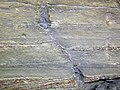 Trace fossil in Vinton Member siliciclastics (Logan Formation, Lower Mississippian; Rt. 16 roadcut northeast of Frazeysburg, Ohio, USA) 6 (33047078260).jpg