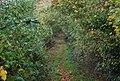 Track east from Little Worsham Farm - geograph.org.uk - 1578794.jpg