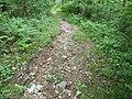 Trail damage 1.JPG