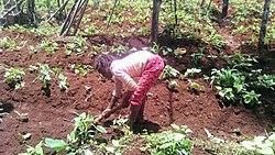 Travail de l'enfant camerounais 01.jpg