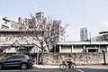 Tree On Street (228962659).jpeg