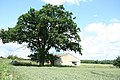 Tree and a barn - geograph.org.uk - 844211.jpg