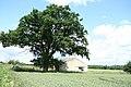 Tree and a barn - geograph.org.uk - 844211.jpg
